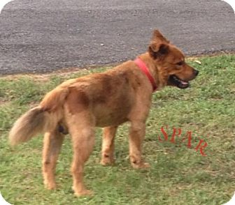 Terrier (Unknown Type, Medium)/Chow Chow Mix Dog for adoption in Rockmart, Georgia - Rusty