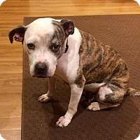 Adopt A Pet :: Sandy in Texarkana Texas - Texarkana, TX