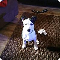 Adopt A Pet :: Toby - Ararat, VA