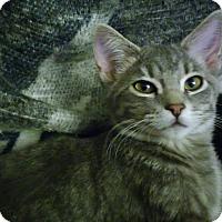 Adopt A Pet :: Clark - Owatonna, MN