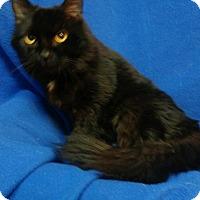Adopt A Pet :: Georgia - Newport, KY