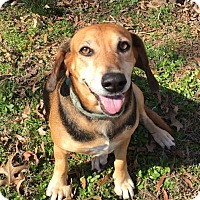 Adopt A Pet :: Louise meet me 3/24 - Manchester, CT