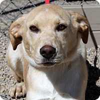 Adopt A Pet :: Maggie - Salt Lake City, UT