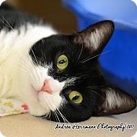 Adopt A Pet :: Salina - East Hartford, CT