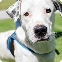 Adopt A Pet :: Mason - Greenwood, SC