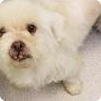 Adopt A Pet :: River 4689 - Columbus, GA
