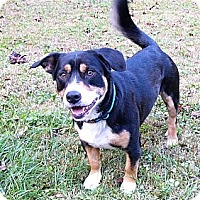 Adopt A Pet :: Huckleberry - Mocksville, NC