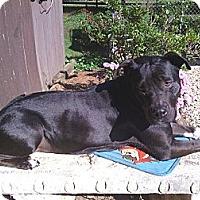 Adopt A Pet :: Jorgia - Blue Ridge, GA