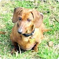 Adopt A Pet :: Luther - San Jose, CA