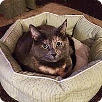 Adopt A Pet :: Quinn - N. Billerica, MA