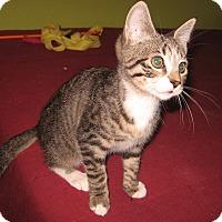 Adopt A Pet :: Tristan - Colmar, PA