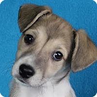 Adopt A Pet :: Delaney - Minneapolis, MN