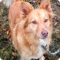 Adopt A Pet :: Stevie - Princeton, KY
