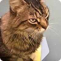 Adopt A Pet :: Mr. Mixie - Davis, CA