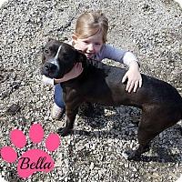 Adopt A Pet :: Bella #2 - Des Moines, IA