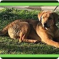 Adopt A Pet :: Buster - Murrieta, CA