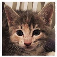 Adopt A Pet :: Joon - Leonardtown, MD