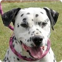 Adopt A Pet :: Boomer - Turlock, CA