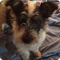 Adopt A Pet :: BO - Sardis, TN