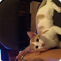 Adopt A Pet :: Monty - Phoenix, AZ