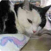 Adopt A Pet :: Peekaboo - Scottsdale, AZ
