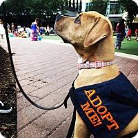 Adopt A Pet :: Delilah- Free Puppy Training - Houston, TX