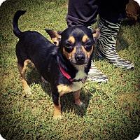 Adopt A Pet :: Lil Bit - Fort Valley, GA