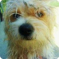 Adopt A Pet :: Theodore - Medford, MA