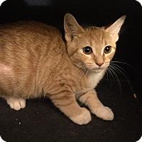 Adopt A Pet :: Minnie - Sterling Hgts, MI