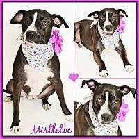 Adopt A Pet :: Mistletoe - Phoenix, AZ