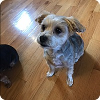 Adopt A Pet :: Doll - West Deptford, NJ