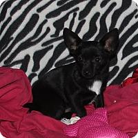 Adopt A Pet :: Samantha - Ridgecrest, CA