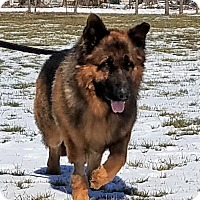 Adopt A Pet :: Flint - Kouts, IN