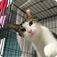 Adopt A Pet :: Ariel - Warwick, RI