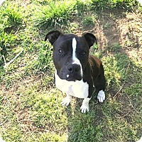 Adopt A Pet :: Raymond - Yuba City, CA