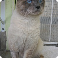 Adopt A Pet :: Marius - Sherman Oaks, CA