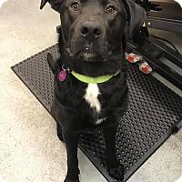 Adopt A Pet :: MANFORD (TACOMA) - Bainbridge Island, WA