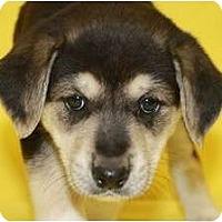 Adopt A Pet :: Bud - Broomfield, CO