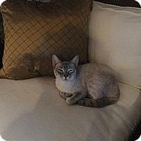 Adopt A Pet :: Regina - Phoenix, AZ