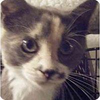 Adopt A Pet :: Mo - Kensington, MD