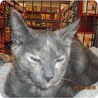 Adopt A Pet :: Rosie - Riverside, RI