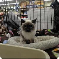 Adopt A Pet :: Maya - Warren, MI