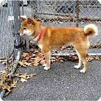 Adopt A Pet :: Zira - Washington, NC