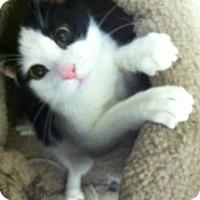 Adopt A Pet :: Popeye - Trevose, PA