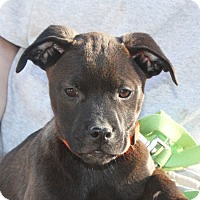 Adopt A Pet :: Silas - PENDING, in Maine - kennebunkport, ME