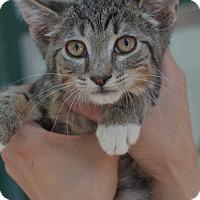 Adopt A Pet :: Kimmy - Brooklyn, NY