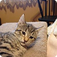 Adopt A Pet :: Holly-COMING SOON! - Bridgeton, MO
