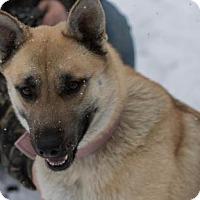 Adopt A Pet :: Sonny - South Haven, MI