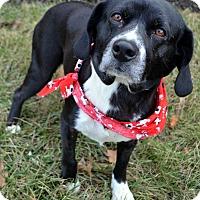 Adopt A Pet :: Rif - Bridgeton, MO