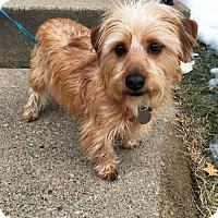 Adopt A Pet :: Ratatouille - Princeton, MN